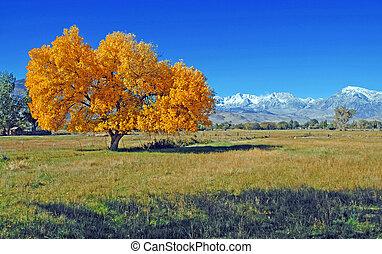 herfst, in, de, oostelijke sierra