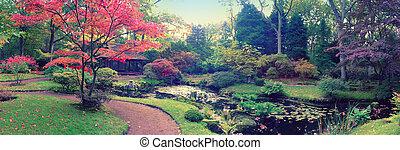 herfst, in, japanner, park