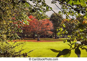 herfst, in, land zijde