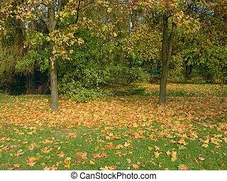 herfst, in park