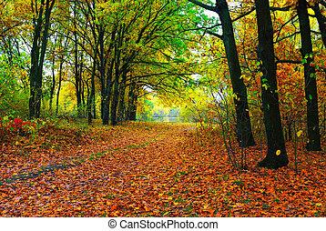 herfst, kleurrijke, bomen, en, steegjes