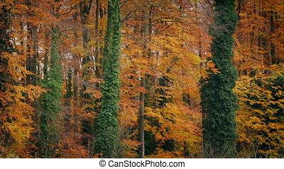 herfst, kleurrijke, bomen