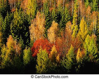 herfst, kleurrijke, bos