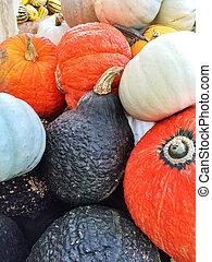 herfst, kleurrijke, squashes