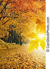 herfst, landscape