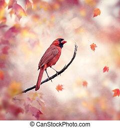 herfst, mannelijke , kardinaal, achtergrond, noordelijk