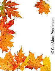 herfst, maple-leaf