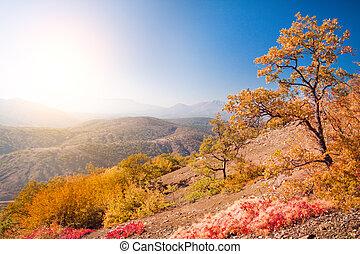 herfst, mountain., eik