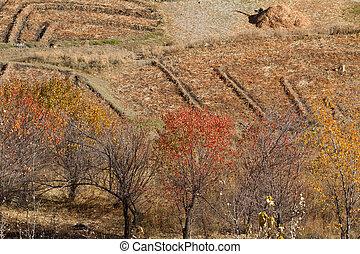 herfst, nepal, landscape