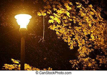 herfst, park, nacht