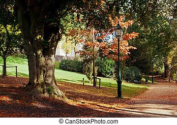 herfst, park, scène