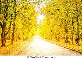 herfst, park, straat