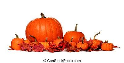 herfst, pompoennen, en, dalingsbladeren, grens, vrijstaand, op wit