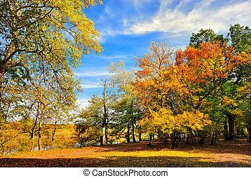herfst, rivier bankieren, bomen
