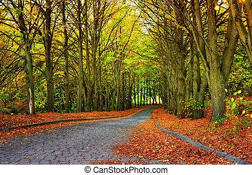 herfst, seizoen, in het park