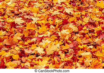 herfst, sinaasappel en rood, autumn leaves, op, grond