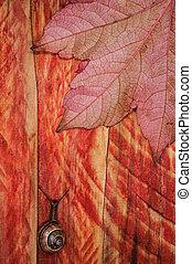 herfst, slak, blad, hout, achtergrond