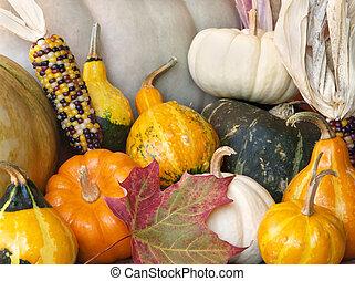 herfst, squash, gourds