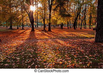 herfst, stad park, scène