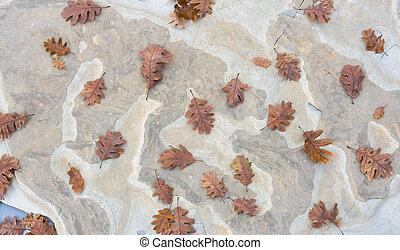 herfst, steen, eik loof, achtergrond