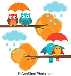 herfst, stellen, vogels, uilen