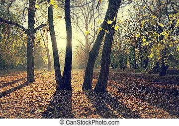 herfst, stijl, park, retro