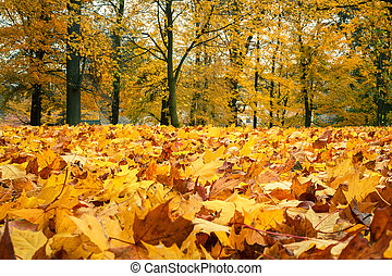 herfst, stilleven, met, gele, de bladeren van de esdoorn