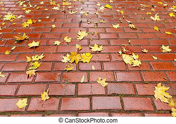 herfst, trottoir, gebladerte, bedekte