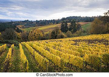 herfst, vallei, willamette, oregon, wijngaarden