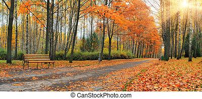 herfst, vallende verlofen, in, een, stad park