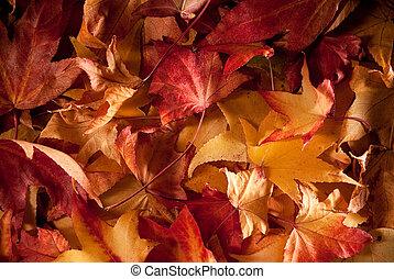 herfst, vellen