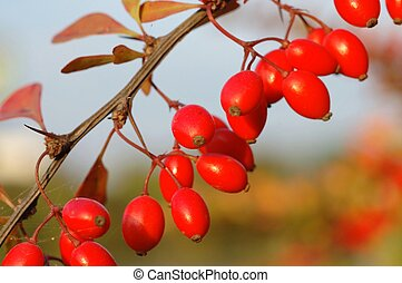 herfst, vruchten