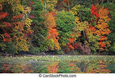 herfst, weerspiegelingen, bomen