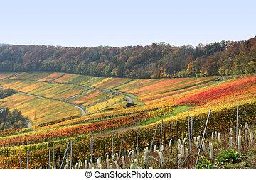 herfst, wijngaard, landschap