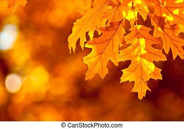 herfst, zeer, ondiepe focus, bladeren
