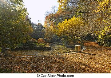 herfstachtig, kleuren, in park, met, kleine, pool