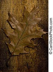herfstblad, op, oud, plank