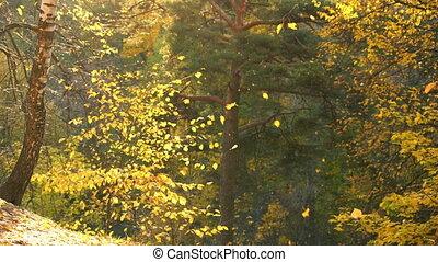 herfstblad, park, herfst