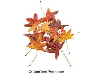 herfsten, bladeren