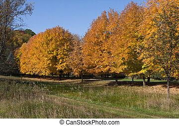 herfsten, gouden, kleuren