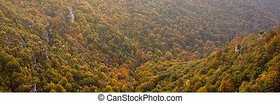 herfsten, kleuren, dekking, de, vallei