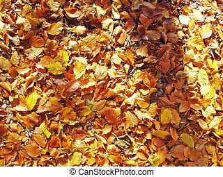 herfsten
