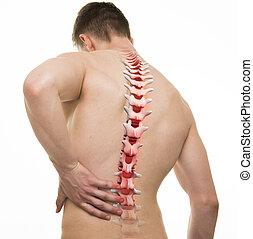 herido, espina dorsal, -, tiro del estudio, con, 3d, ilustración, aislado, blanco