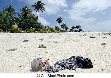 Hermit Crab - Aitutaki Lagoon Cook Islands - Hermit crab...
