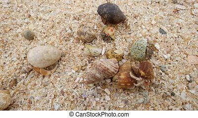 Hermit crab on the beach running away. Top view.