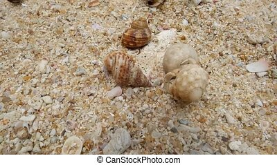 Hermit crab on the beach running away. Top view. Concept of...