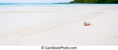 Hermit crab on the beautifull beach of the tropical Maldives...