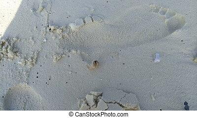 Hermit crab runs on sand. 4k
