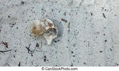 Hermit crab. - Hermit crab on the sandy beach.