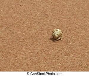 Hermit crab walking on the beach sand